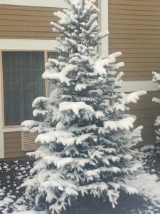 1.1446758975.last-night-s-snow-williams-az