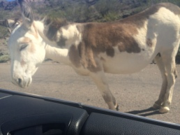 Underlying of Wild Burros street gang. (His job was to block traffic.)
